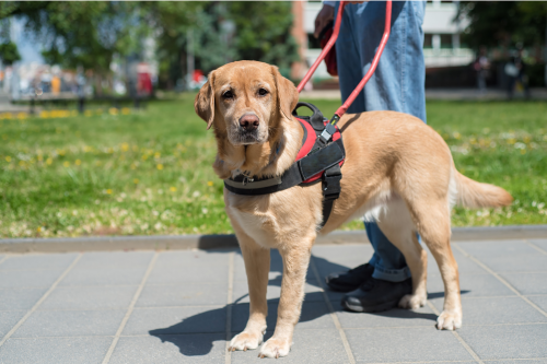 What Makes an Animal More Than Just a Pet Pamphlet - Service Animals Assist People with Many Types of Disabilities - Invisible Disabilities Association
